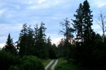 7-22_trail