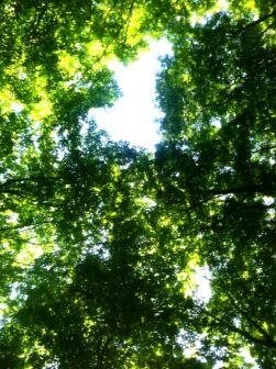 7-22_treetops
