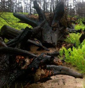 7-27_stumps